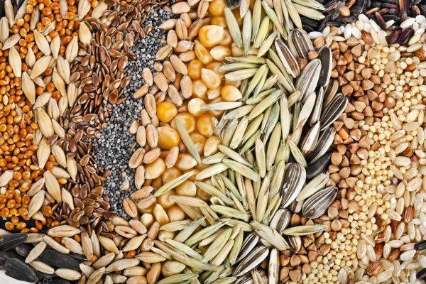 Власти Беларуси запретили вывозить из страны пшеницу и другие зерновые