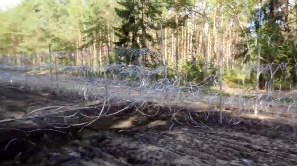 На границе с Польшей погиб лось, запутавшись в ограждениях колючей проволоки